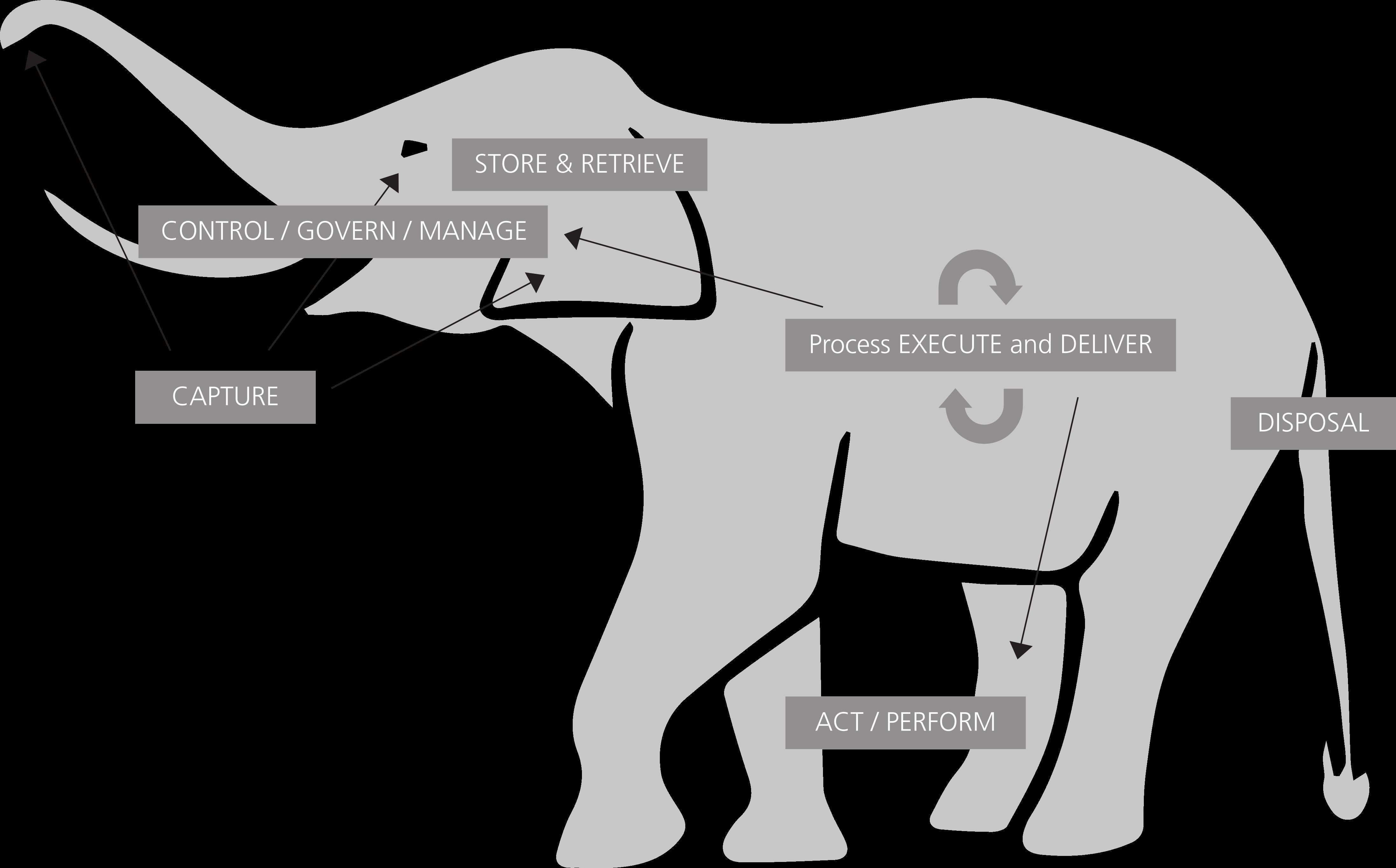 abb10_informationselefant
